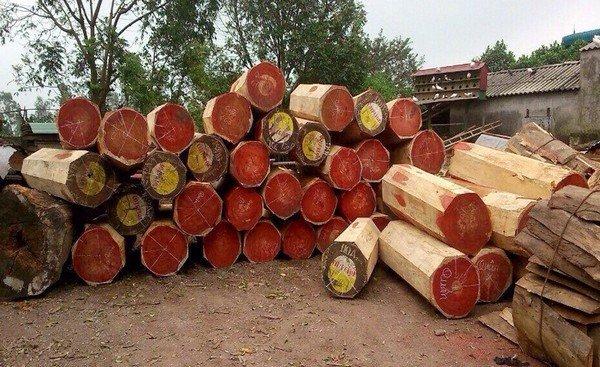Đừng để bị lừa vì không biết cách nhận biết gỗ hương - dung de bi lua vi khong biet cach nhan biet go huong 2