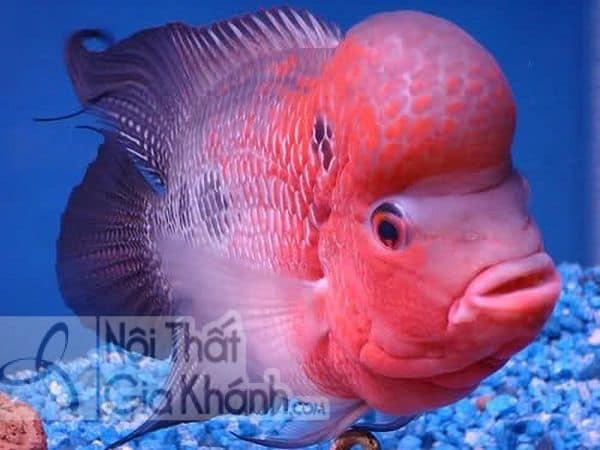 Đặt bể cá trong phòng khách thế nào mới hợp phong thủy - dat be ca trong phong khach the nao moi hop phong thuy 2