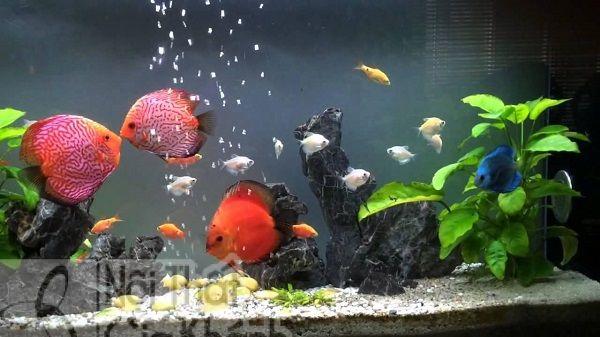 Đặt bể cá trong phòng khách thế nào mới hợp phong thủy