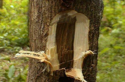 Bí mật sẽ được bật mí về gỗ trầm hương trong bài viết sau!