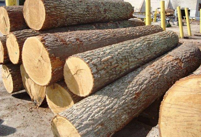 Chúng ta có thể nhận biết gỗ bằng lăng qua mùi hương? - chung ta co the nhan biet go bang lang qua mui huong 2