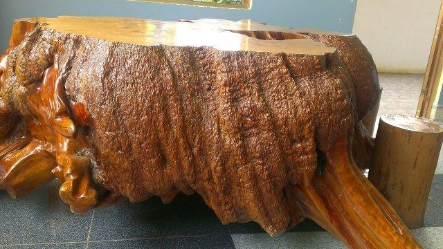 Chúng ta có thể nhận biết gỗ bằng lăng qua mùi hương? - chung ta co the nhan biet go bang lang qua mui huong 3