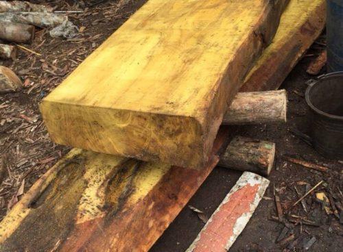 Đặc điểm của gỗ mít và những ứng dụng của gỗ