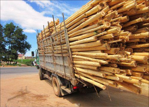 Đồ nội thất gỗ keo có tốt không?
