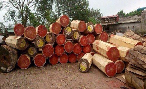Đừng để bị lừa vì không biết cách nhận biết gỗ hương