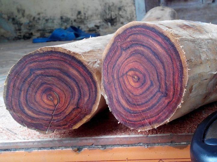 Lõi của gỗ sưa vân chia làm 4 phía màu nâu đỏ đẹp mắt