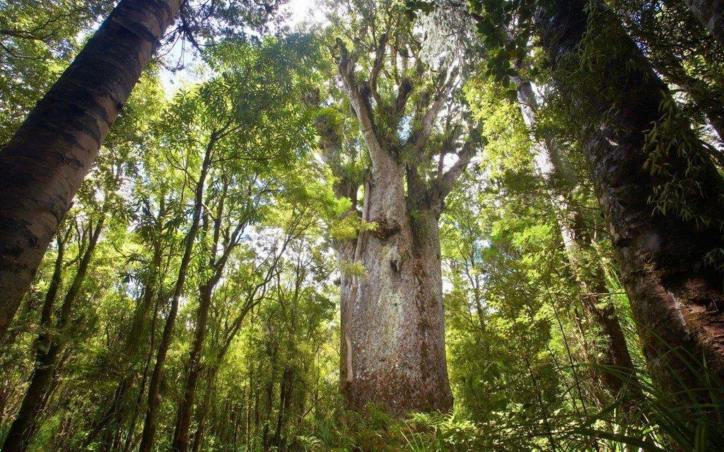 Lá cây có dạng hình elip, màu sáng đẹp và xanh tươi