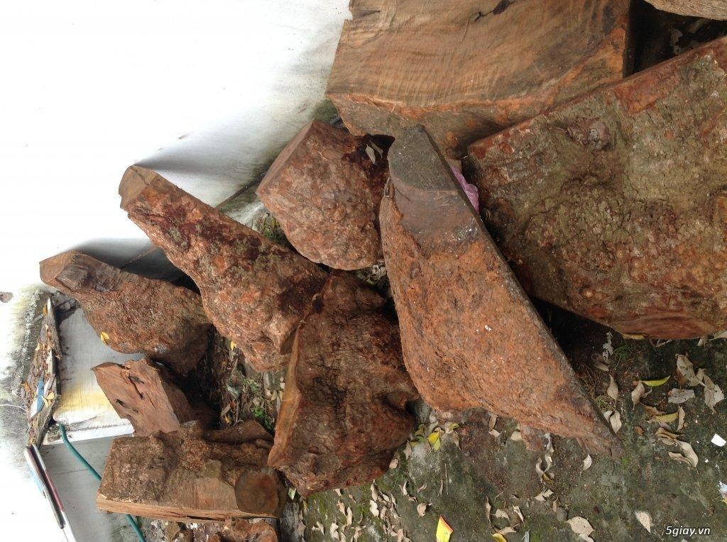 Những điều thú vị về gỗ xá xị không phải ai cũng biết - nhung dieu thu vi ve go xa xi khong phai ai cung biet 02