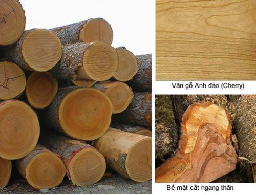 Những ứng dụng của gỗ anh đào