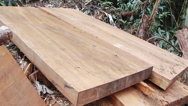 Ứng dụng của gỗ samu trong đời sống - ung dung cua go samu trong doi song 2